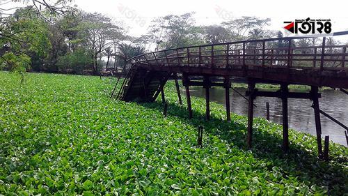 কলাপাড়ায় ব্রিজ ভেঙে ১১ গ্রামের মানুষের দুর্ভোগ
