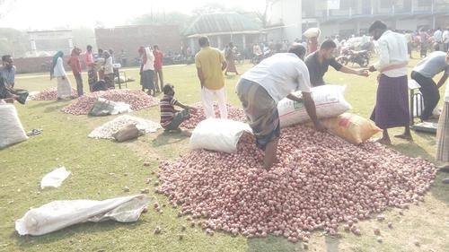 পেঁয়াজের দাম কম, হতাশ বালিয়াকান্দির কৃষকরা