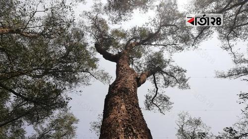 Kukri Mukri-natural protection barrier 'Mangrove'