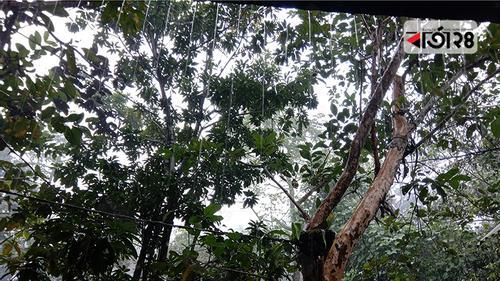 আম্পানের প্রভাবে বরিশালে ৫৯.৬ মিলিমিটার বৃষ্টি