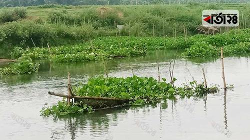 মাথাভাঙ্গা নদীতে দেশী মাছের বংশ ধ্বংসে মহাযজ্ঞ