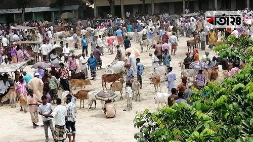 স্বাস্থ্যবিধির তোয়াক্কা না করে ঠাকুরগাঁওয়ে গবাদিপশুর হাট