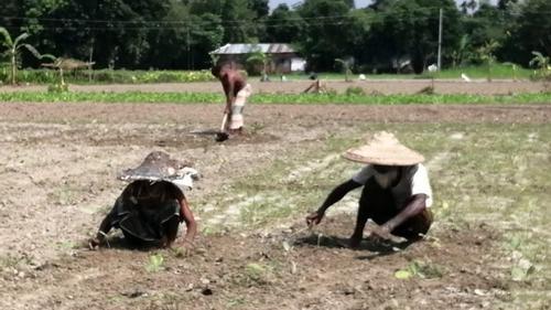 শীতকালীন আগাম সবজি চাষে পিছিয়ে পড়েছে কৃষকরা