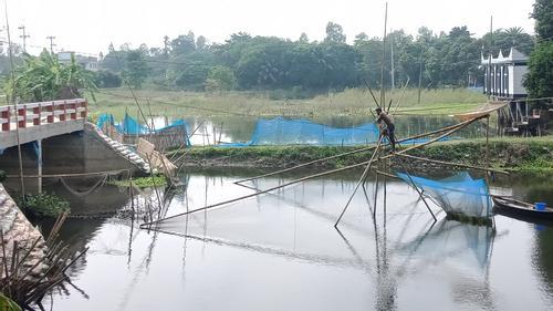 অবৈধ ভেসাল পেতে দেশীয় মাছের পোনা নিধন