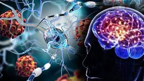 Corona can attack the human brain directly