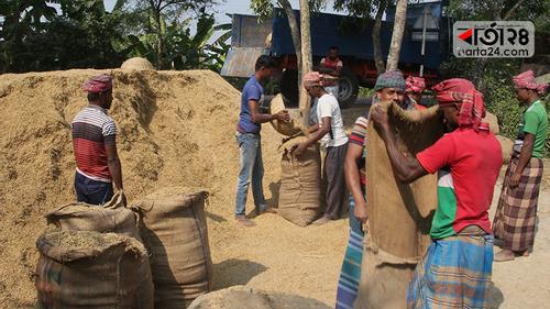 পটুয়াখালীতে আমন ধানের ভালো দামে খুশি কৃষক