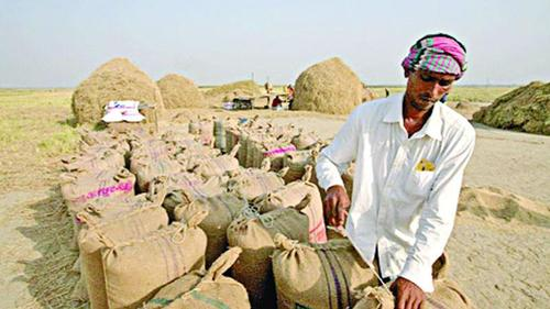 Pattern of selling surplus paddy is under process of changing