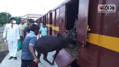 Special Cattle Train incurs huge loss for the government!