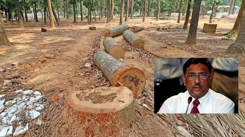 Don't worry about Suhrawardy Udyan's tree: Quader