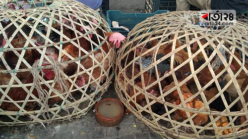 বাজার দর: দাম বেড়েছে তেল, ডাল ও মুরগির