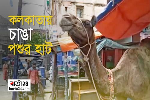 কলকাতায় চাঙা কোরবানির পশুর অস্থায়ী হাট