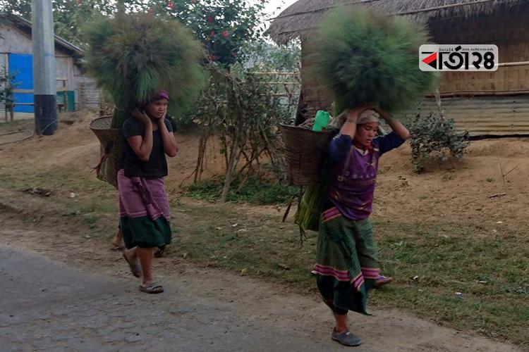 ঝাড়ু ফুল সংগ্রহ করে বাজারে নিয়ে যাচ্ছেন পাহাড়ী নারীরা / ছবি: বার্তা২৪