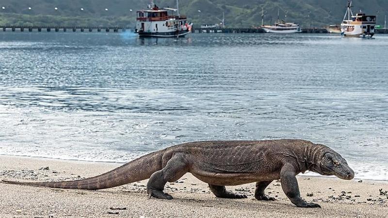 Tourist banned in Dragon island