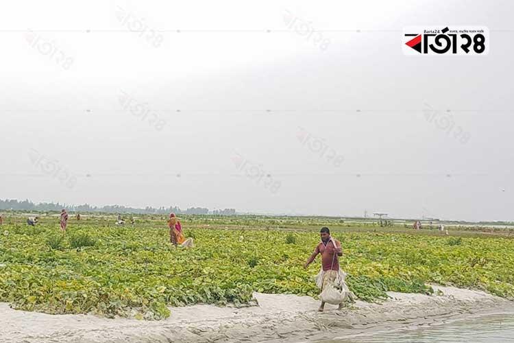 রংপুরের তিস্তা নদী বেষ্টিত চরাঞ্চল। ছবি: বার্তা২৪.কম