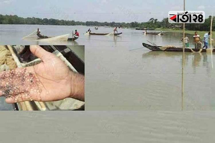 Mother fishes release eggs in Halda