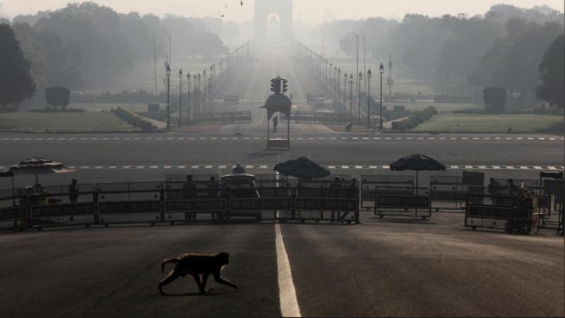 ভারতের রাষ্ট্রপতি ভবনের সামনের সড়ক পার হচ্ছে একটি বানর